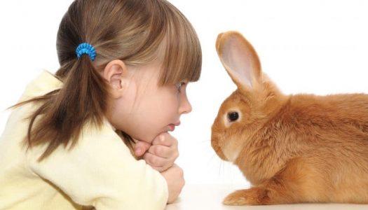 Kinderen en dieren